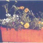 Cách trồng kết hợp các loại hoa trong cùng chậu