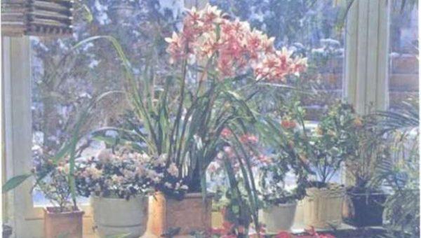 Ảnh hưởng của nhiệt độ lên cách trồng lan trong nhà