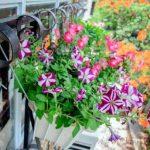 Cách trồng kết hợp nhiều loại hoa trong chậu treo