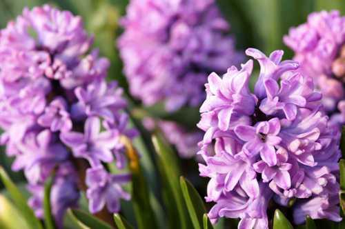 cach trong hoa tien ong mang an khang den nha 8