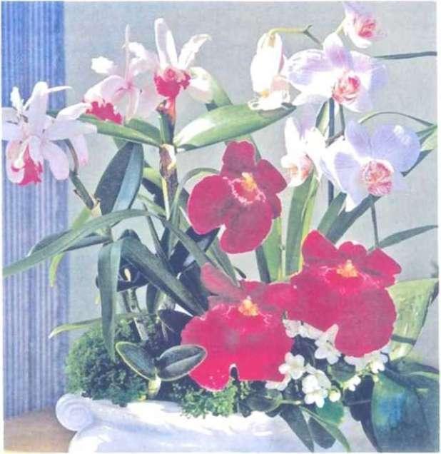 Dây là những cành lan đã được cắt ra nhưng vẫn tươi lâu, gồm các loài lan Cattleva, Phalaenopsis, Miltonia cùng với cây hoa violet châu Phi và lớp rêu phủ.