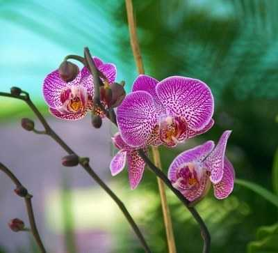 cach trong lan ho diep phalaenopsis 10