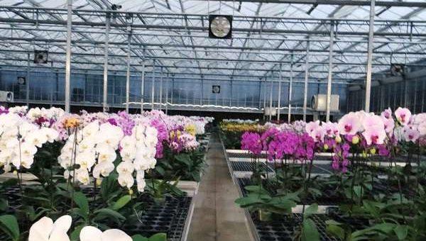 Cách trồng lan bằng đèn huỳnh quang
