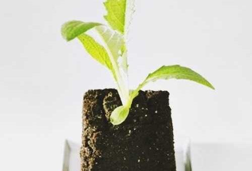 13 bước hướng dẫn cách trồng rau sạch trong chậu và khay nhỏ