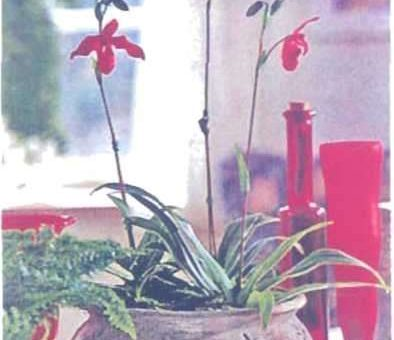 Cách trồng lan trong chậu