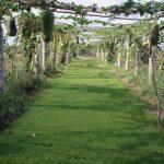 Mô hình gieo mạ thảm tiết nước và giống cho vụ đông xuân