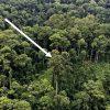 Cây nhiệt đới cao nhất thế giới ở Malaysia