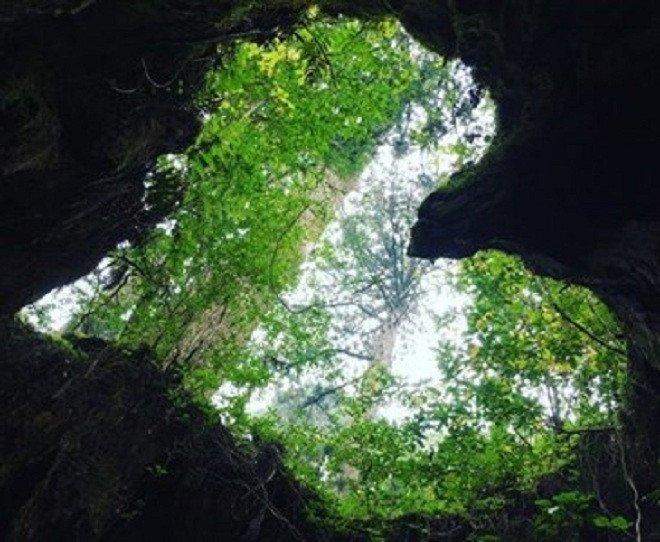 Ngoài ra, các yếu tố như sét đánh, sự phá hoại của nấm, vi khuẩn hay động vật cũng có thể là nguyên nhân khiến cây bị rỗng ruột.