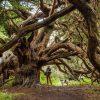 Khu rừng phù thủy bí ẩn ở nước Anh