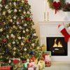 Quy trình cách chăm sóc cây thông Noel