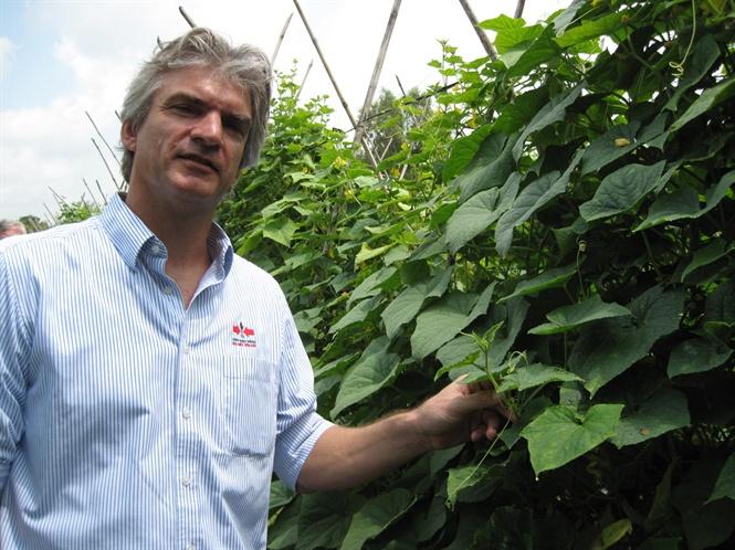 Lưu ý khi trồng bắp thực phẩm