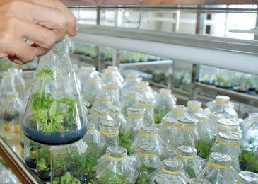 Khoa học cây trồng giúp bảo tồn nguồn nước