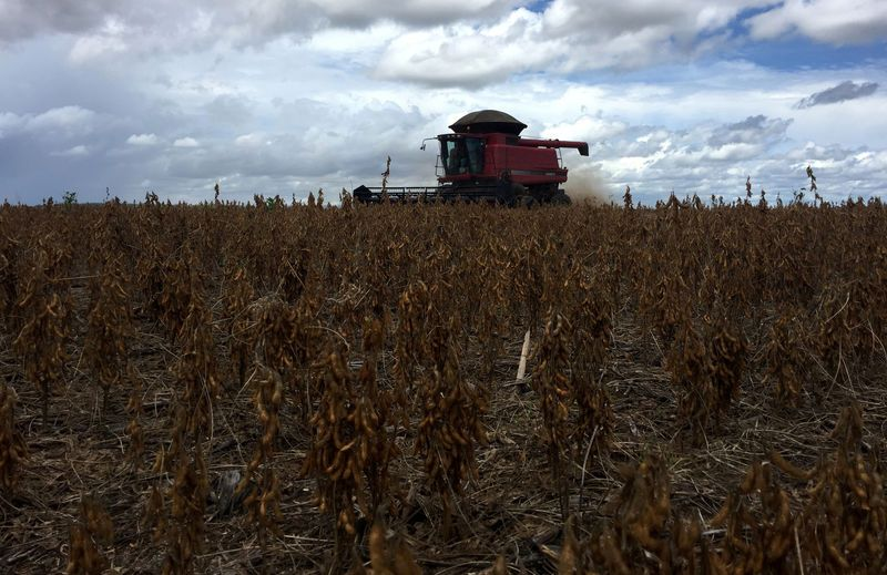 Thu hoạch đậu tương tại Porto Nacional, tỉnh Tocantins , Brazil